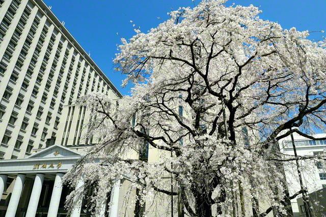 東京・八王子市の創価大学キャンパス