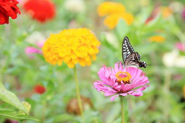 色とりどりの花々が咲き誇る「さぬきこどもの国」のフラワーガーデン(香川県高松市)=四国支社・池田栄一通信員