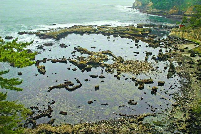 五浦海岸で最も大きい「大五浦」。干潮時にはさまざまな岩礁が姿を現す=安藤寿男教授提供