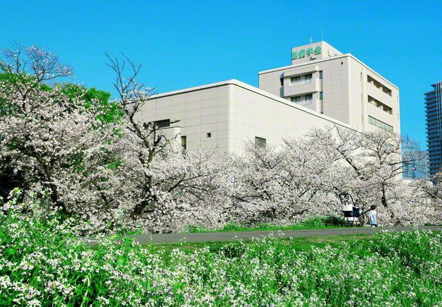 池田先生の故郷・大田。多摩川の土手から、堂々とそびえる大田池田文化会館を仰ぐ。満開の花の波に包まれた桜の城は、友の前進を見守るかのよう