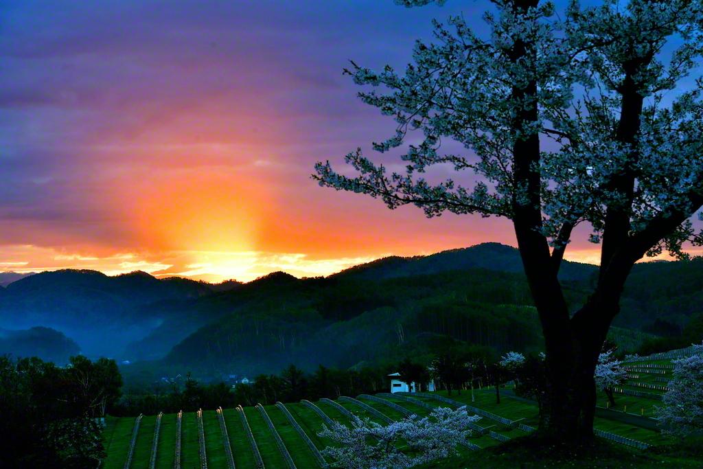 力強く朝日が昇る