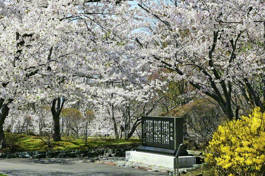 「同志の歌」の碑が桜に包まれて