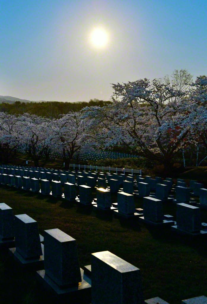 優しい月光が墓石を照らした